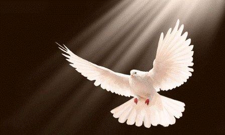 obra-del-espiritu-santo.jpg